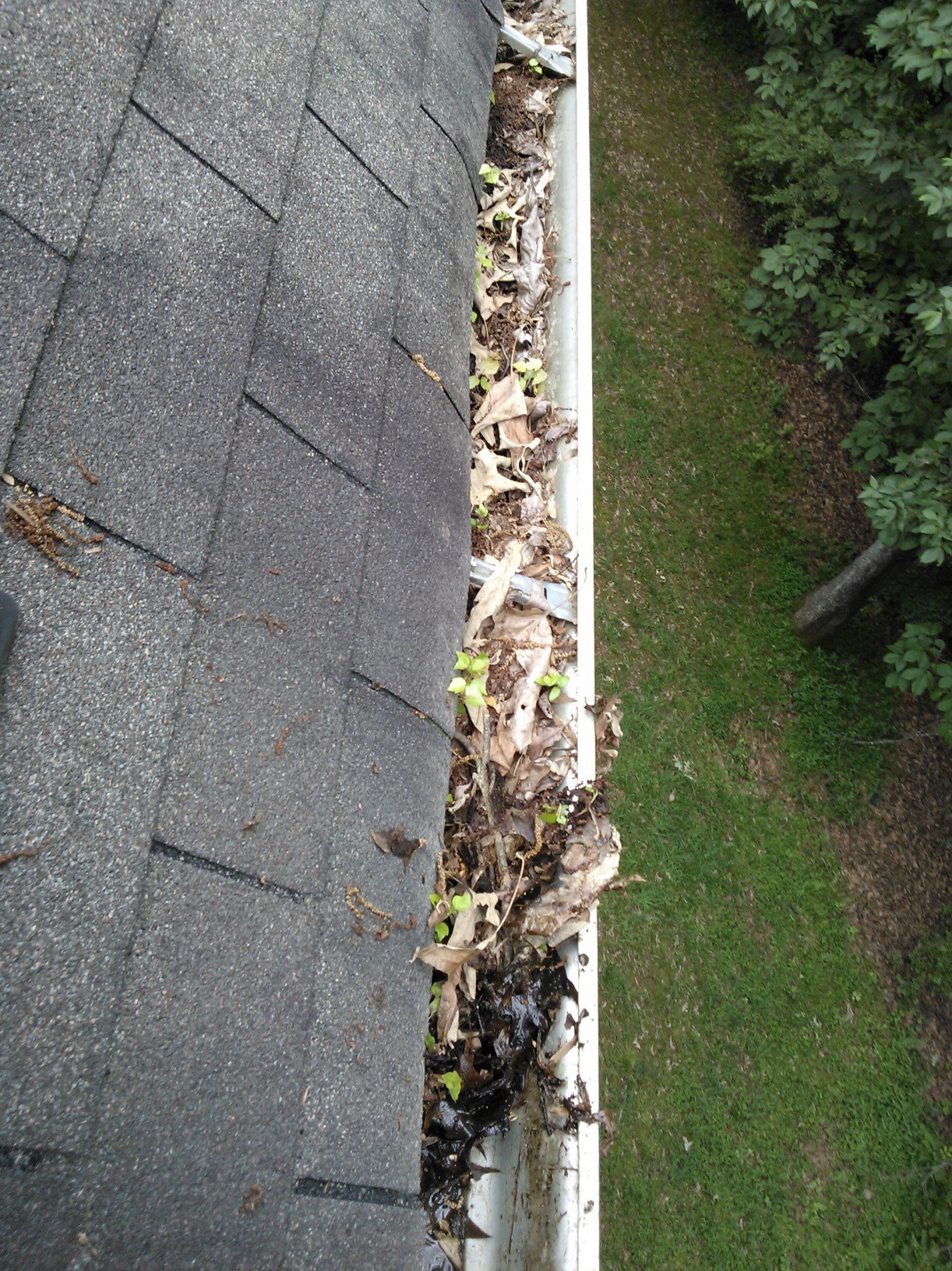 gutter_in_need_of_cleaning